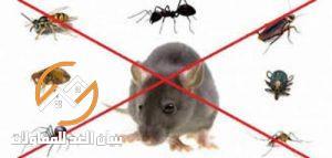 شركة مكافحة الحشرات بالخرج