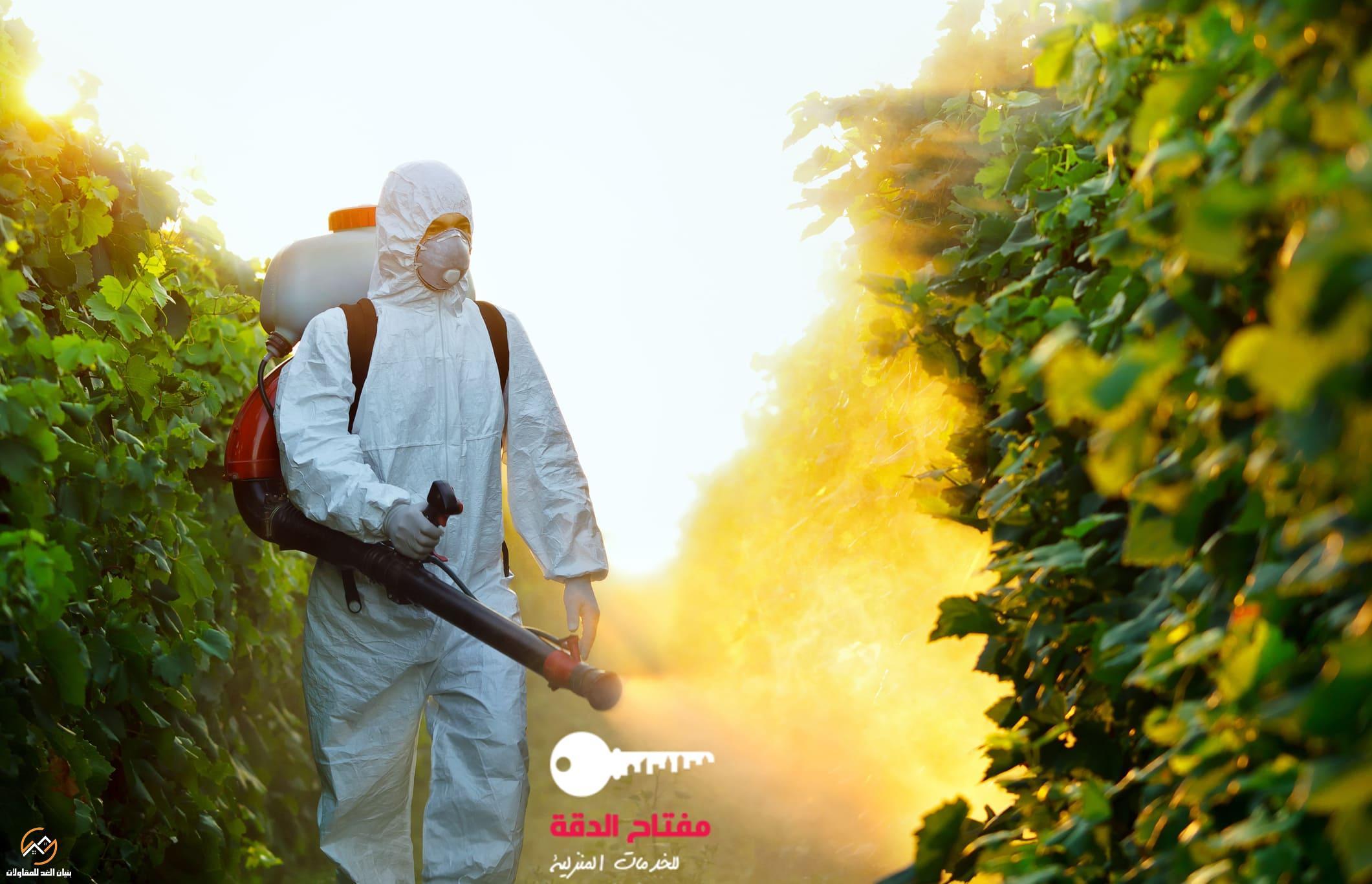 شركة رش مبيدات الحشرات بالرياض